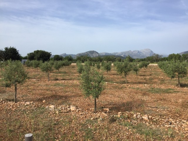 About buying land plots in Mallorca